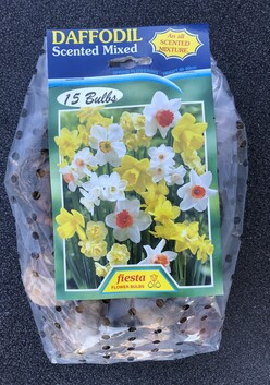 Daffodil Bulbs Scented Mix x 15